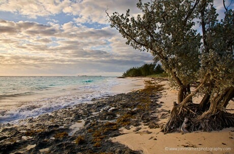 Morning beach scene, Green Turtle Cay, Abacos. We will miss the place.