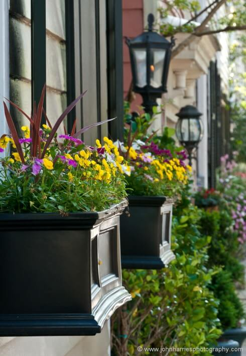 I struggled all winter to capture the way that house owners use flowering plants to adorn their dwellings. The problem is that it is all too easy to come away with just another picture of a window box that could be anywhere.