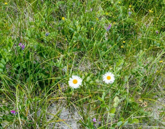 Flower rich dunes